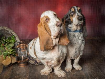 Alfie & Humphey